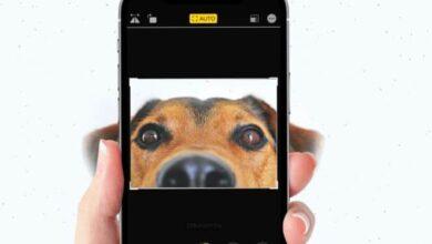 كيفية اقتصاص الصور على iPhone أو iPad